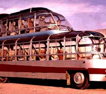 Автобус за градски турове - Citroen U55 Cityrama Currus