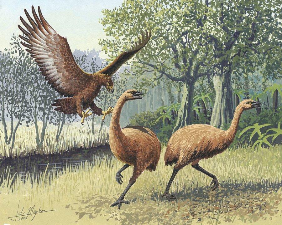 орелът на хааст