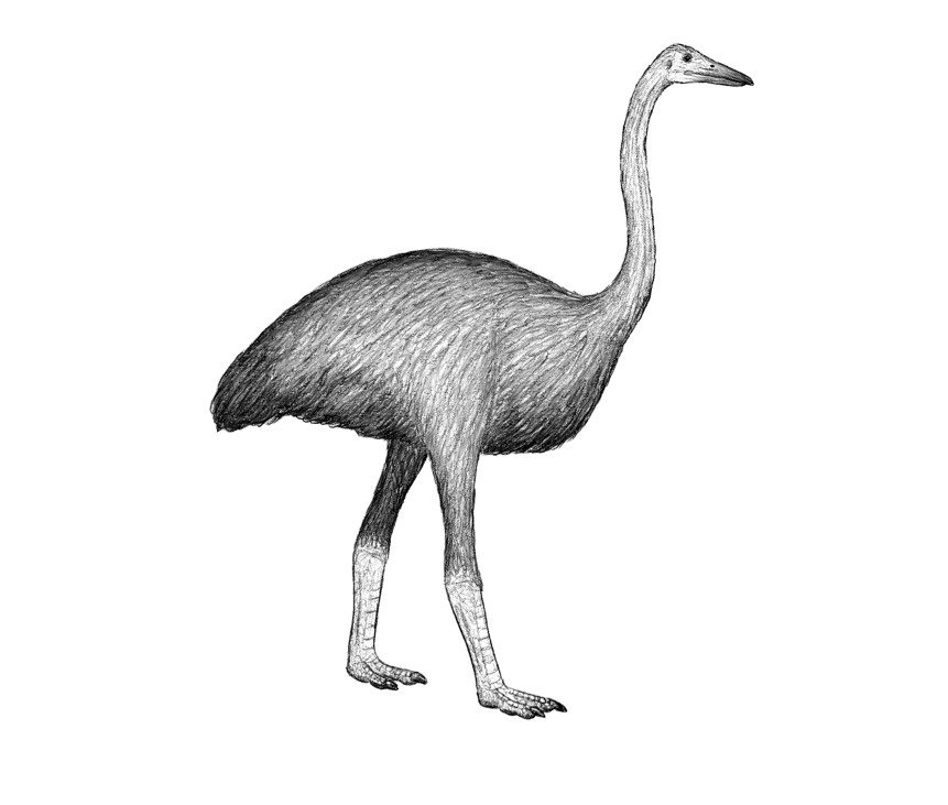 слонска птица