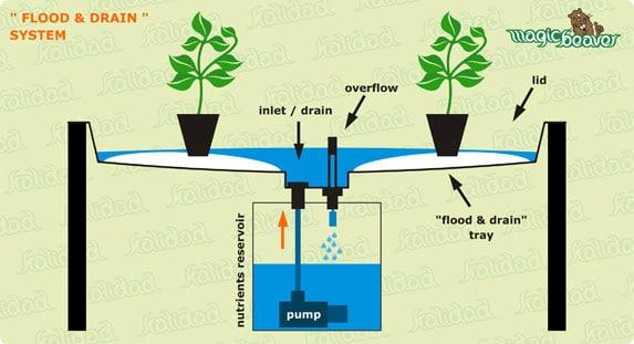 хидропонна система с прилив и отлив (Ebb and Flow)